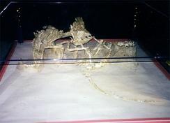 Скелеты сражающихся велоцираптора и протоцератопса