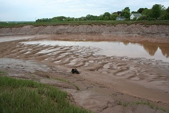Sinuous-crested dunes exposed at low tide in the Cornwallis River near Wolfville, Nova Scotia