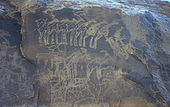 Ancient rock engraving showing herds of giraffe, ibex, and other animals in the southern Sahara near Tiguidit, Niger.