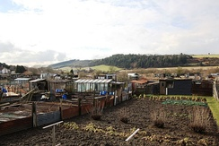 UK allotment gardens near Middlesbrough, showing typical sheds and use of junk and recycled materials