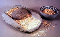 Mano, metate and bowl of corn. Museum display of Ancestral Pueblo artifacts at Mesa Verde National Park.