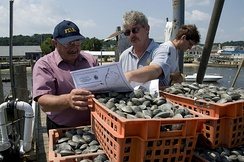 FDA official and New Jersey state inspector review harvest of clams