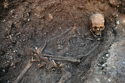 Skeleton as discovered