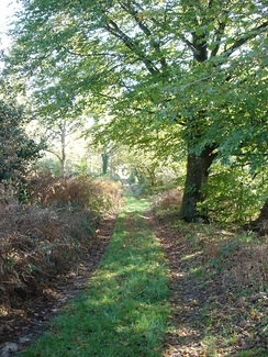A track in Castle Hill Wood