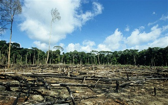 Deforestation is the removal of a forest or stand of trees from land, the wood is harvested as a resource for production of consumer products and firewood for heat. The land then either left to recover and then will be replanted or is converted to non-forest land used as agricultural land or development of urban areas.