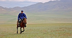 While the Mongolian horse continues to be revered as the national symbol, they are rapidly being replaced by motorized vehicles.