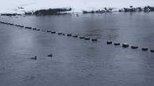 Bolton Abbey stepping stones, River Wharfe (22nd March 2013) 003.JPG