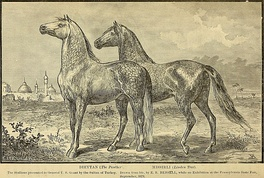 Gifts from the Sultan to Grant, two Arabian stallions