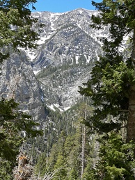 Kyle Canyon in the Mount Charleston Wilderness