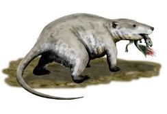 Гигантский репеномам добыл молодого пситтакозавра