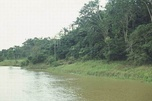 Amazon River in Amazon Rainforest.