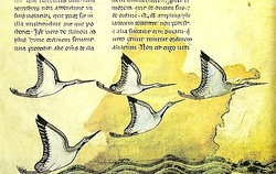 An image from an old copy of De arte venandi cum avibus