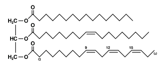 Schematic diagram of a triglyceride with a saturated fatty acid (top), a monounsaturated one (middle) and a polyunsaturated one (bottom).