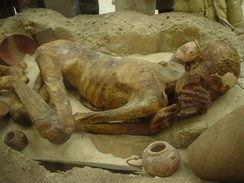 A naturally mummified body in the British Museum.