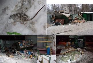 Ухудшение качества работ по очистке жилых районов от мусора создаёт кормовую базу для грызунов. Москва, зима 2016/2017 гг.