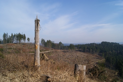 Example of Clear Cut Forest