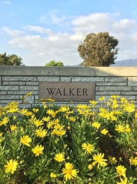 Grave of Paul Walker at Forest Lawn Hollywood Hills