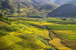 Rice terraces located in Mù Cang Chải district, Yên Bái province, Vietnam