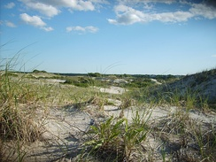 The dunes on Sandy Neck are part of the barrier beach that helps prevent coastal erosion.