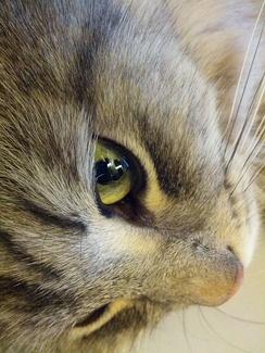 Дикий зеленый цвет глаз