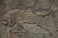 Assyrian low relief, Lion Hunt of Ashurbanipal, North Palace, Nineveh