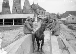 A horse undergoes treatment for a skin disease at a British veterinary hospital in 1916