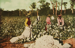 An illustrated depiction of black people picking cotton, 1913