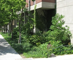 Rain garden, SUNY College of Environmental Science and Forestry, Syracuse, New York