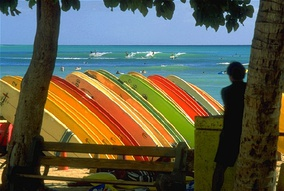 Photo of dozens of surfboards on rack. Each board is perpendicular to the ground and parallel to the other boards. Ocean in background.