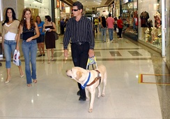 A blind man is assisted by a guide dog in Brasília, Brazil