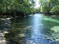 Stream from the springs feeding the Suwannee River