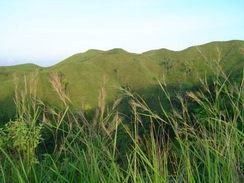 Green grass covering mountains in Maasin City