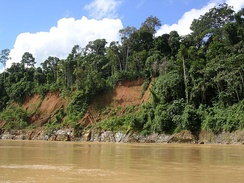 Amazon River rain forest in Peru
