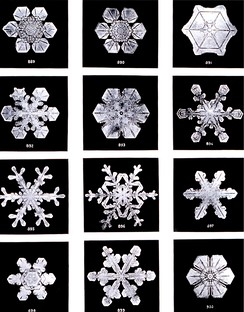 Snowflakes by Wilson Bentley, 1902.