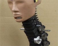 Head, neck, and thoracic spine of a crash test dummy