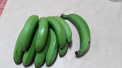 Bunch of cooking bananas (guineos) and one loose plantain (Morovis, Puerto Rico)