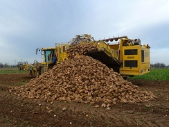 A sugar beet harvest in progress, Germany