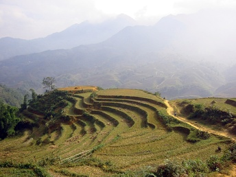 An example of advanced anthropization: the cultivation of rice in terraces in Vietnam