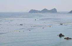 Ферма по выращиванию культивированного морского жемчуга