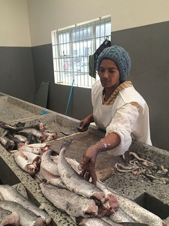 A worker preparing fish caught off the coast of South Africa