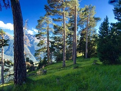 Preserved internal alpine forest and meadow, Vanoise National Park