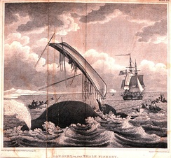 Dangers of the Whale Fishery, 1820. One whaleboat is up-ended, and another has a taut line, showing that the whale it harpooned may take the sailors on a Nantucket sleighride