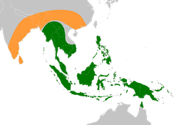 Original native ranges of the ancestors of modern edible bananas. Musa acuminata is shown in green and Musa balbisiana in orange.[46]