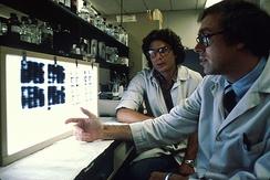 Исследователи изучают слайды культур клеток, вырабатывающие моноклональные антитела, чтобы выбрать наиболее перспективные из них