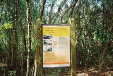 "Sign on the Withlacoochee State Trail marking the site of the ""Great Train Wreck of 1956"" at Pineola, Florida."