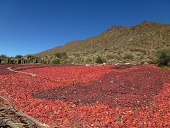 Red peppers in Cachi (Argentina) air-drying before being processed into powder