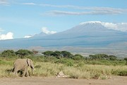 An elephant passing by the snow-capped Mt. Kilimanjaro