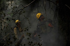 Wildfire fighters cutting down a tree using a chainsaw