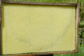 """Artificial honeycomb"" foundation plate in which bees have already completed some cells"