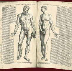 Two facing pages of text with woodcuts of naked male and female figures, in the Epitome by Andreas Vesalius, 1543